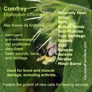 Comfrey Infogram